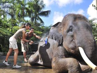 Elephant Safari Park Lodge Hotel Bali - Elephant Washing