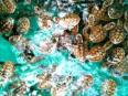 Mangenguey Island Coron - Surroundings