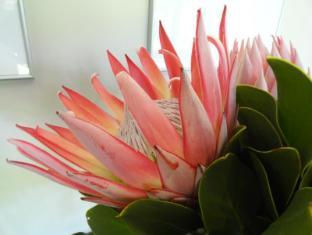Sugarbird Manor Stellenbosch - Interno dell'Hotel