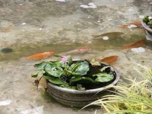 Puri Khatulistiwa Hotel Bandung - Fish Ponds