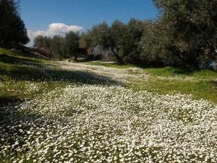 Bikakis Family Apartments Crete Island - Surroundings