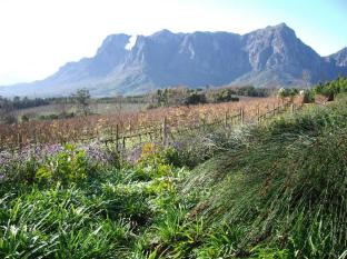 Clouds Wine and Guest Estate Stellenbosch - Food, drink and entertainment