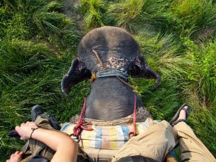 Maruni Sanctuary Lodge Chitwan National Park - Elephant Safari