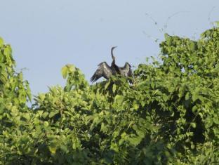 Maruni Sanctuary Lodge Chitwan National Park - Bird