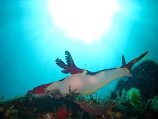 Camiguin Action Geckos Dive & Adventure Resort - More photos