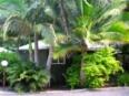 Rainforest Holiday Village Sunshine Coast - Garden