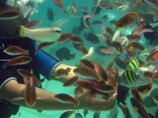 Bluewater Panglao Beach Resort Бохол - Наличие на забележителност наблизо