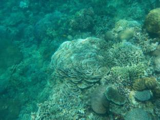 Sea Turtle House Себу - Спорт и активный отдых