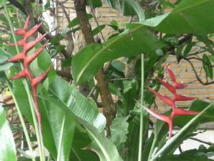 Tropical Bali Hotel Bali - Giardino