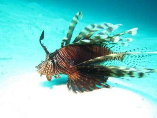 Dive Thru Scuba Resort बोहोल - खेलकूद और गतिविधियां