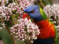 BIG4 Atherton - Woodlands Tourist Park Atherton Tablelands - Birds