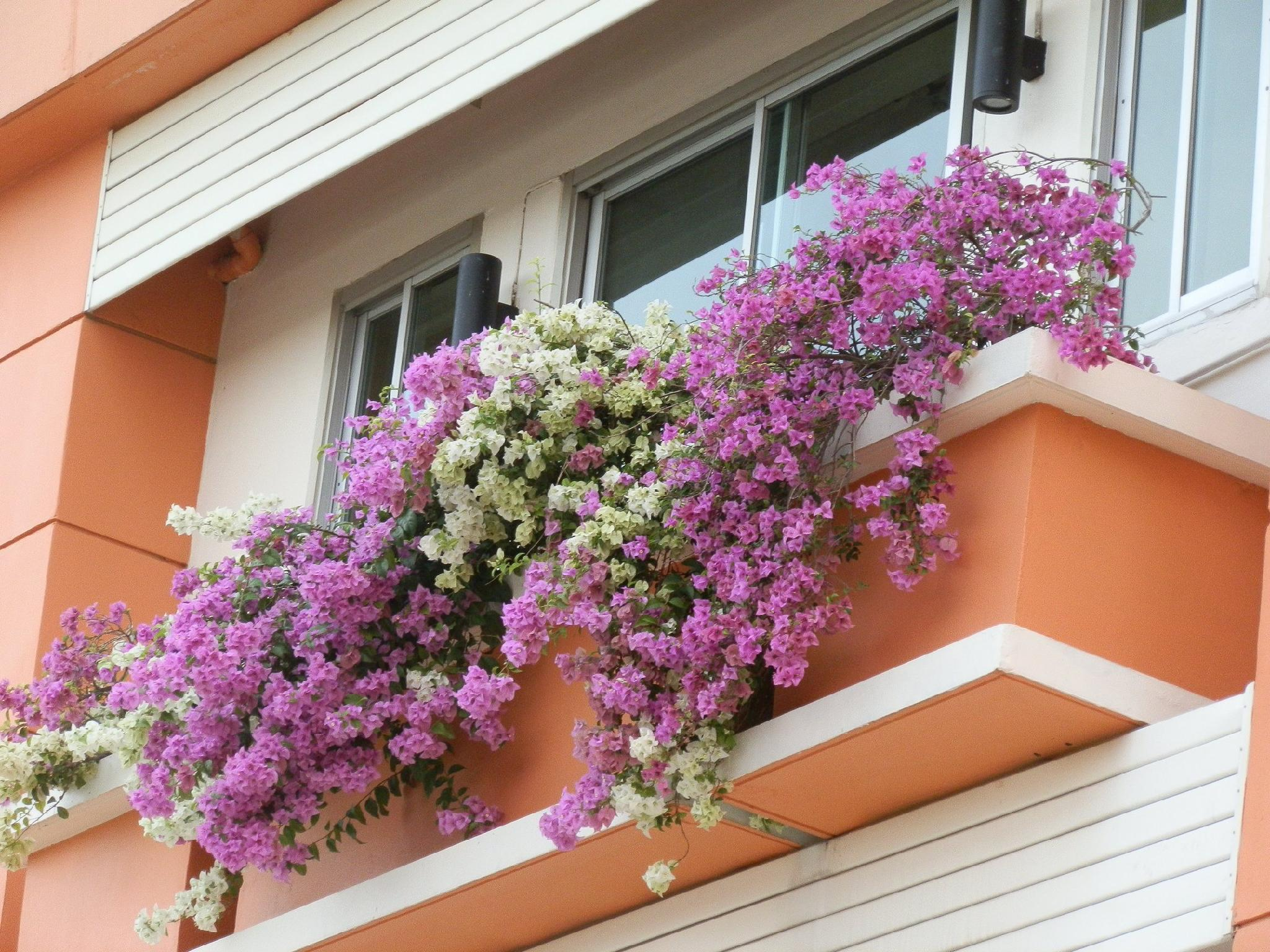 Sandy Serviced Apartment - Hotels and Accommodation in Thailand, Asia