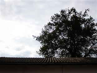 Somrudee Place Fang - Big Tree