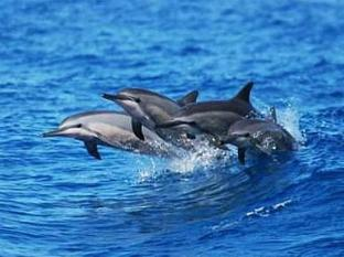 Gie Gardens Hotel Bohol - Dolphin Watching