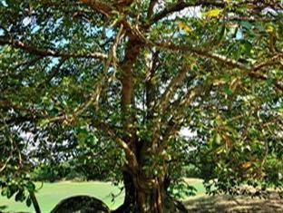 Villa Pulau Besar Malacca / Melaka - The legend of Disula Tree in the Island