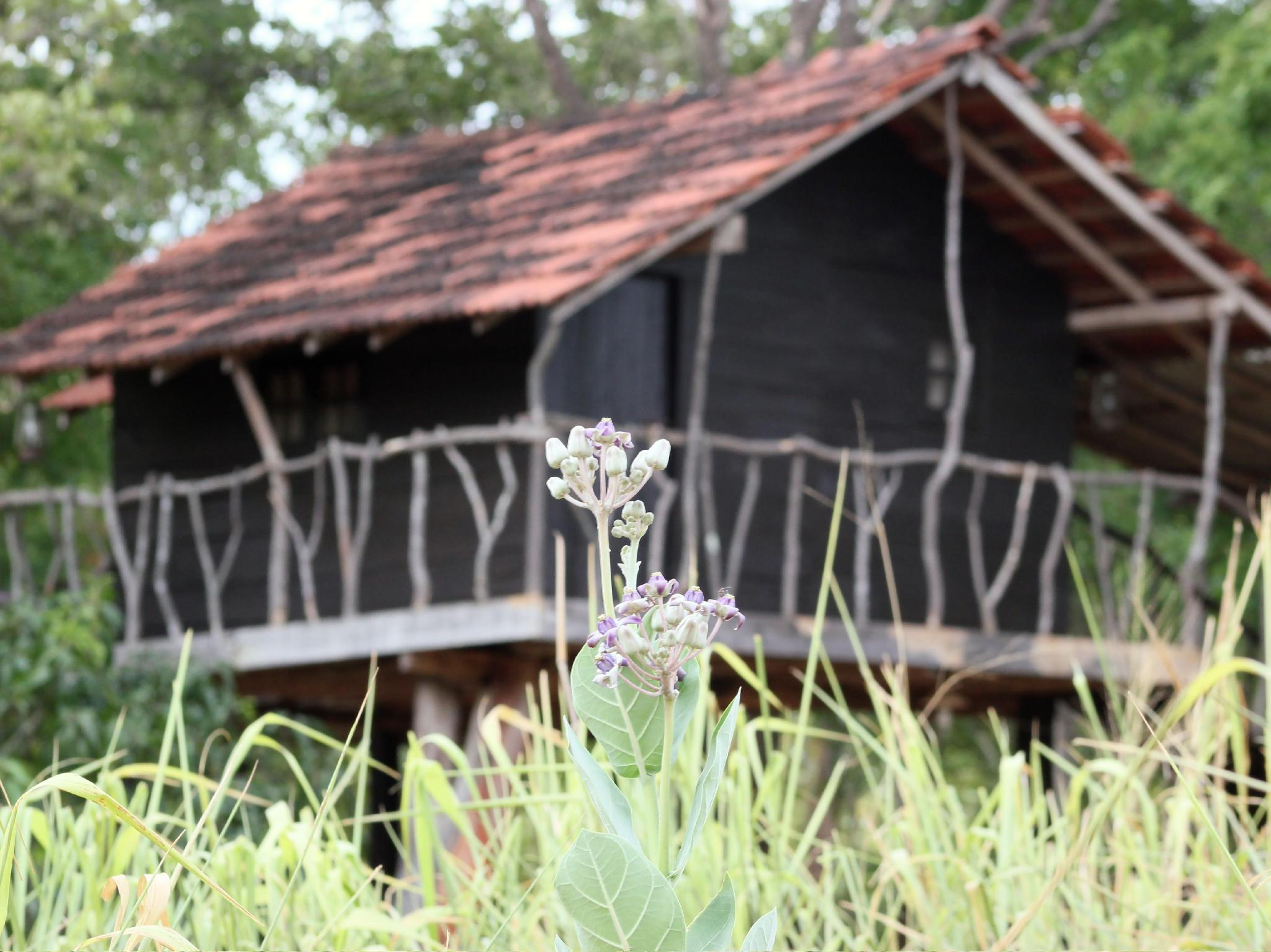 Eagle's Wings Guest House - Hotels and Accommodation in Sri Lanka, Asia