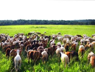 UK Farm Agro Resort Kluang - Standard Farm Activities