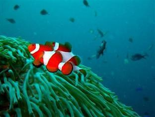 Kalipayan Beach Resort & Atlantis Dive Center بوهول - المناطق المحيطة
