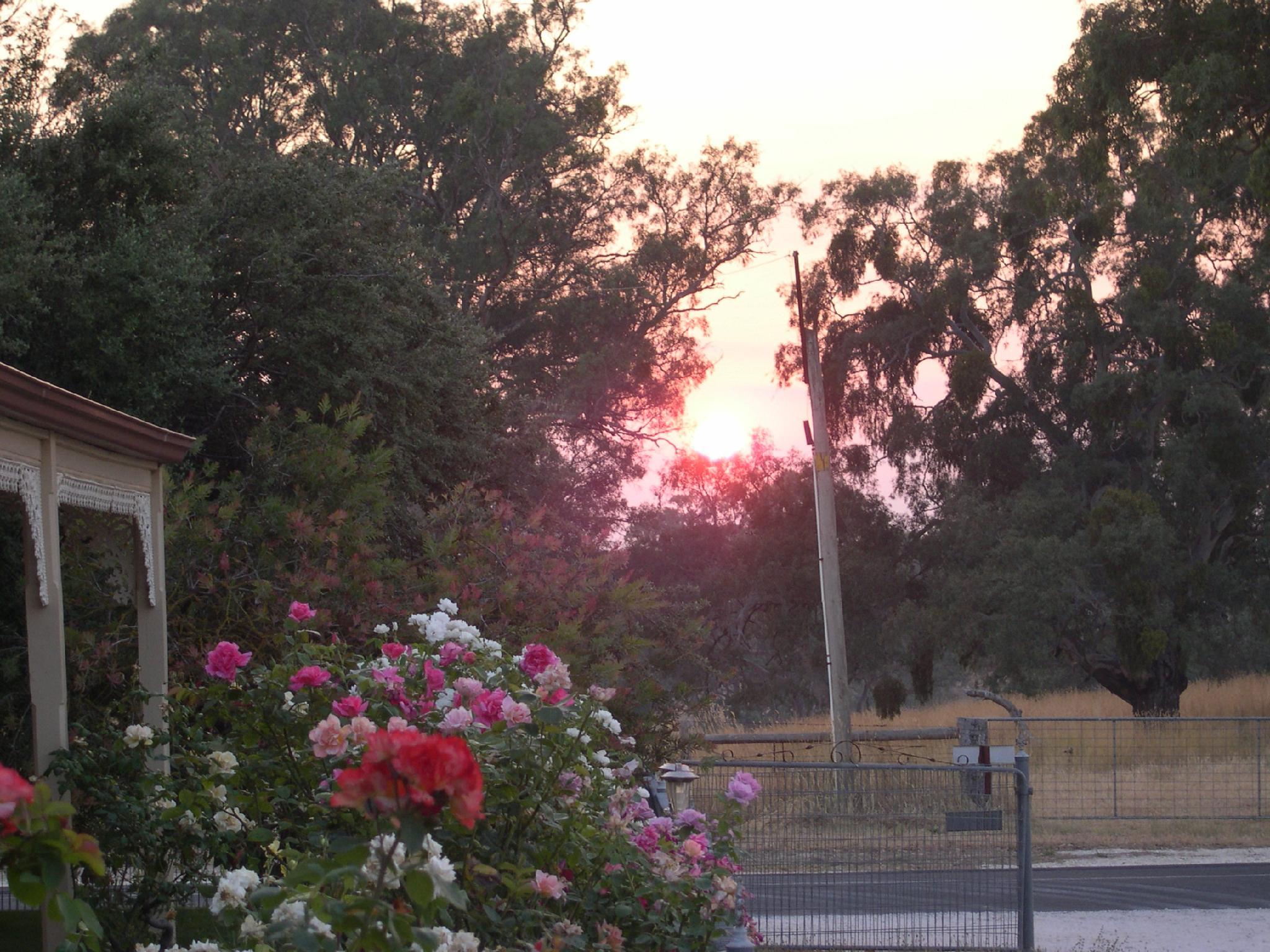 Wroxton Grange B&B - Hotell och Boende i Australien , Barossa Valley