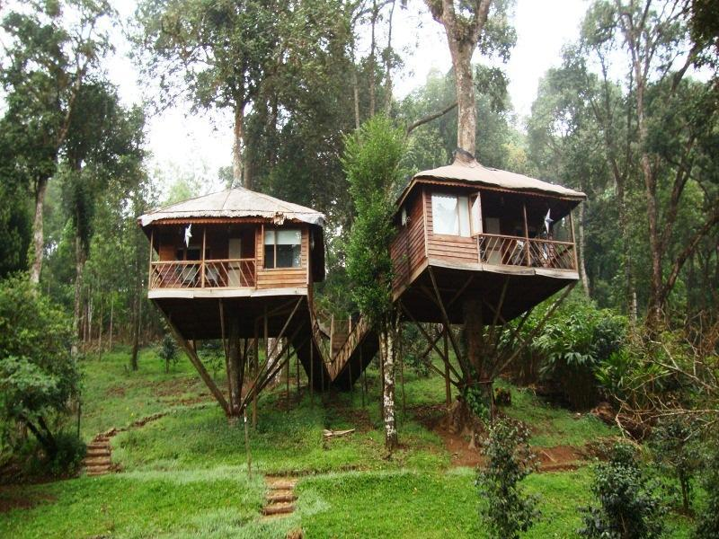 Nature Zone Jungle Resort - Munnar