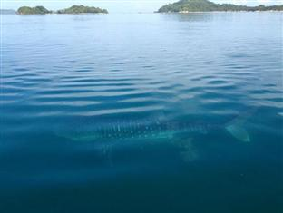 Capari Resort San Vicente - Sighting of a Whale Shark in the Area