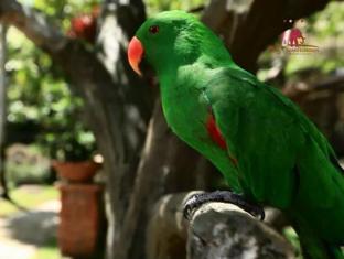 Royal Safari Garden Resort & Convention Puncak - Recreational Facilities