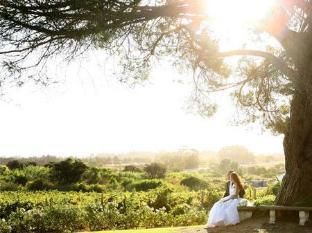 Groenvlei Guest Farm Guest House and Self-Catering Accommodation Stellenbosch - Vineyard