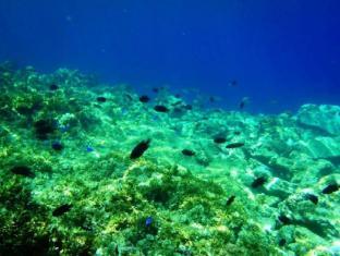 Panglao Kalikasan Dive Resort Bohol - Obližnje atrakcije