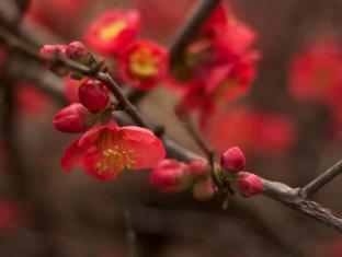 Amphitheatre Hotel B&B Avoca (VIC) - Spring blossoms