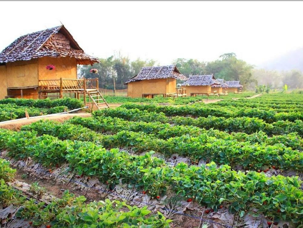 Pai See Tong Strawberry Farm Resort - Hotell och Boende i Thailand i Asien
