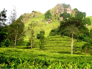 Green Villa Kandy Kandy - Surrounding View