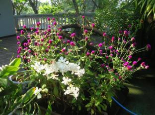 Sagarika Beach Hotel Bentota/Beruwala -  Blooming garden in first floor