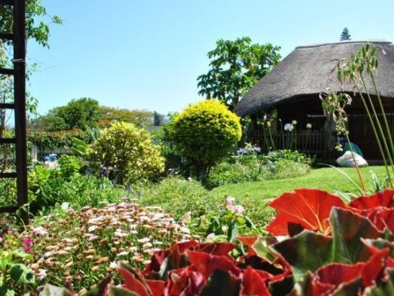 Anabels Bed and Breakfast and Self Catering Durban - Garden Area