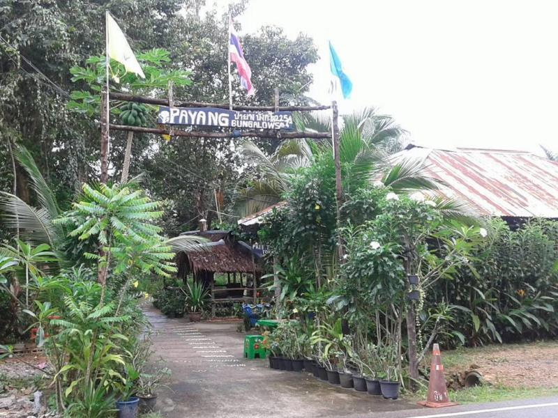 Payang Bungalow - Hotell och Boende i Thailand i Asien