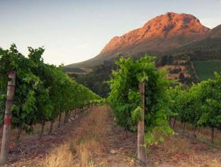 Aaldering Vineyards and Wines Luxury Lodges Stellenbosch - Wine Farm