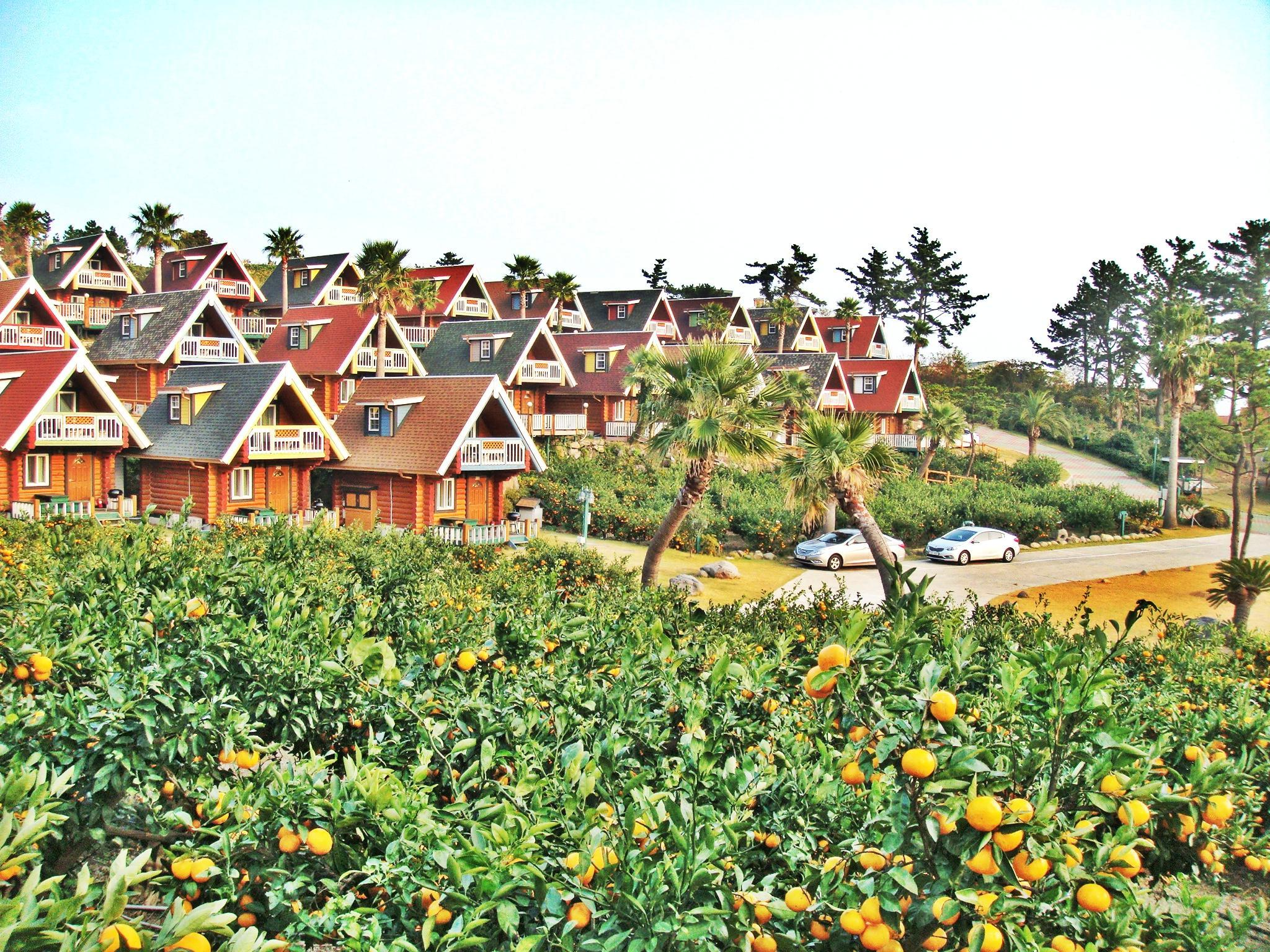 Jungmun Log Pension and Resort16