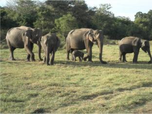 Gunners Club - Minneriya Polonnaruwa - Minneriya National Park