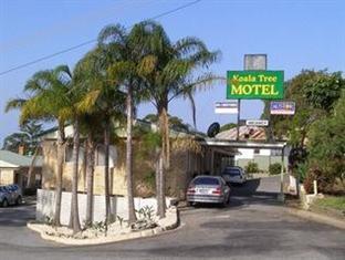 /ar-ae/koala-tree-motel/hotel/port-macquarie-au.html?asq=jGXBHFvRg5Z51Emf%2fbXG4w%3d%3d